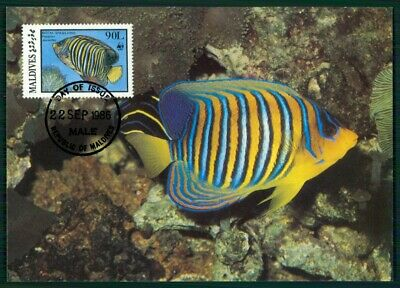 Malediven Mk 1986 Fauna Fische Fish Kaiserfisch Angelfish Maximumkarte Mc En31 Preisnachlass
