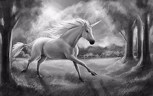 Licorne-Image-de-toile-50x70cm-noir-blanc-creatures-mythiques-toile-Blanc