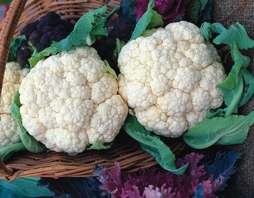 (281)'KINGS' QUALITY cauliflower saint snowy fine seeds- Vegetable