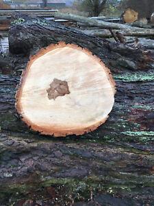 Holzscheibe teilweise ohne Rinde Eiche 50 x 3 cm Baumscheibe