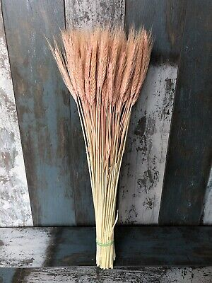 25PCS STEMS DRIED WHEAT//RYE BUNCH WEDDING FLOWERS ARRANGMENT NATURAL BOUQUET