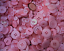 Mixed-Buttons-Colourful-Plastic-Assorted-Arts-Crafts-Card-Making-Sewing thumbnail 8