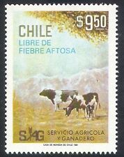 Chile 1981 Cattle/Farming/Animals/Disease/Cows/Nature 1v (n37894)