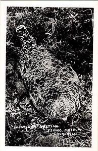 Churchill-Manitoba-Canada-Eskimo-Museum-Ptarmigan-Nesting-Post-Card-Postcard
