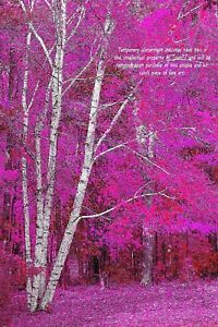Enhanced-Birch-Trees-034-Stand-Out-034-Original-Art-Photo-12-034-x18-034-Signed-by-Artist