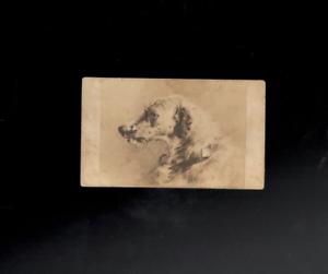 Scottish-Deerhoud-Red-Deer-Hunting-Dog-1878-Edwin-Landseer-Art-Cabinet-Card