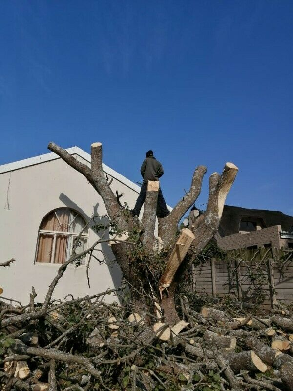 Professional Garden Services & Tree Felling