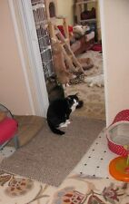FOR SALE: RESCUED KITTY PHOTO ~ Cats & Kittens~Cats_Meow_Antiques Cat Rescue