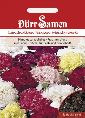 Dürr Graines-pays-ou jardin œillet splendeur Mélange 50 cm pluriannuelle