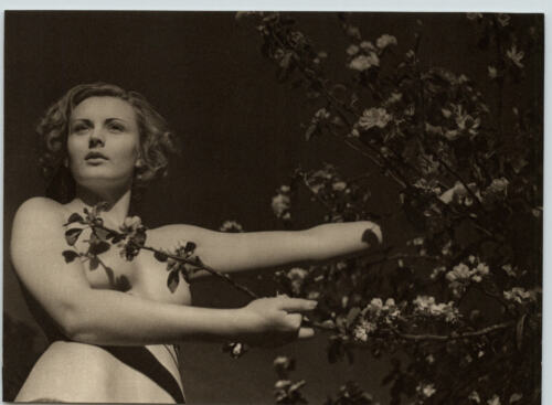 1940 Original FEMALE OUTDOOR NUDE APPLE BLOSSOMS Woman Body JOHN EVERARD PHOTO