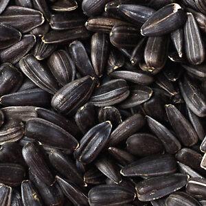 Nourriture pour oiseaux aux graines de tournesol noires, hamsters, perroquets 100% biologiques