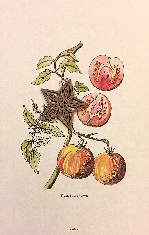 Botanic Art Print Edible Plants Ready to Frame SQUASH /& PUMPKIN*** SEE VARIETY