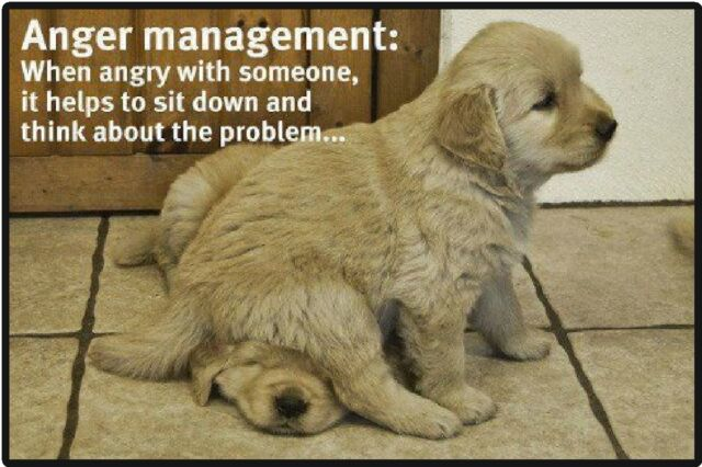 Funny Dog Humor Anger Management Refrigerator Magnet For Sale Online Ebay