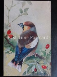 Vintage-PC-Hawfinch-Coccothraustes-coccothraustes