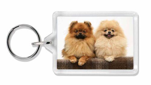Pomeranian Dogs Photo Keyring Animal Gift AD-PO91K