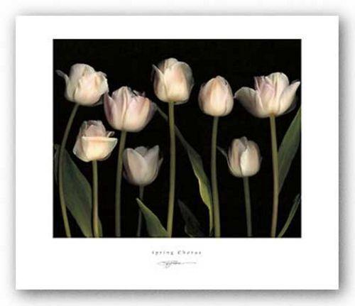 FLORAL ART PRINT Spring Chorus SG Rose