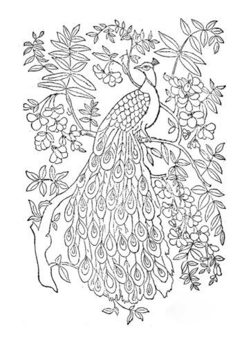 vintage peacock art nouveau design Vintage Visage iron on embroidery transfer