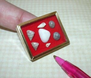 Miniature-Framed-Sea-Shell-Collection-2-RED-DOLLHOUSE-Miniatures-1-12