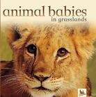 Animal Babies: Animal Babies in Grasslands by Jennifer Schofield and Kingfisher Editors (2004, Board Book)