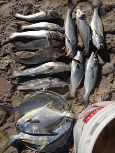 6 Surf // Pier Fishing Rigs: Pompano Snappers Etc. Whitings Croakers