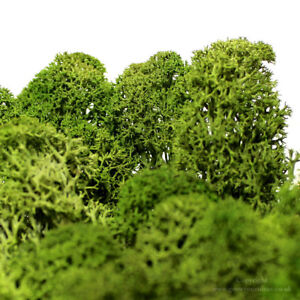 Dried-Reindeer-Moss-Emerald-Green-Perfect-for-air-plants-terrariums-amp-Crafts