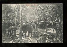 Ceylon KRAAL working Elephants and herd with crowd c1900s PPC animals