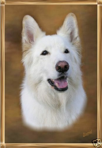 German Shepherd Dog White Auto combined postage Starprint Blank Card 10