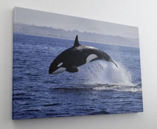 Orca Wal Meer Leinwand Bild Wandbild Kunstdruck L1308