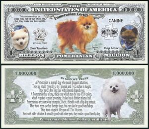 Pomeranian Dog Million W Puppy Adult Pics Facts On Back Lot Of