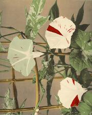 Collotype Ogawa Kazuma Japon Fleur Botany Flowers Vers 1890