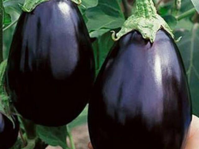 "Eggplant Seeds "" Black Beauty"" (50 Seeds)"