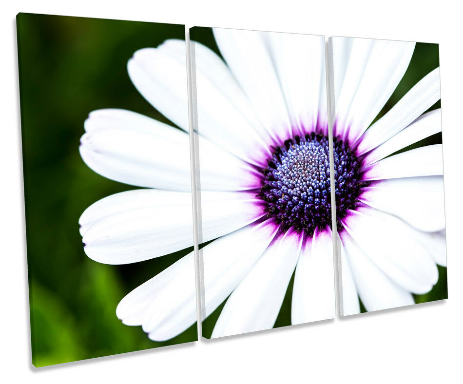 Floral Gerbera Flower TREBLE CANVAS Wand Kunst Box Framed Drucken