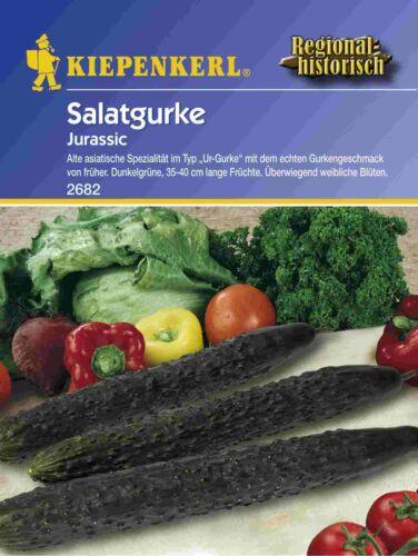 Cucumber Jurassic Urgurke
