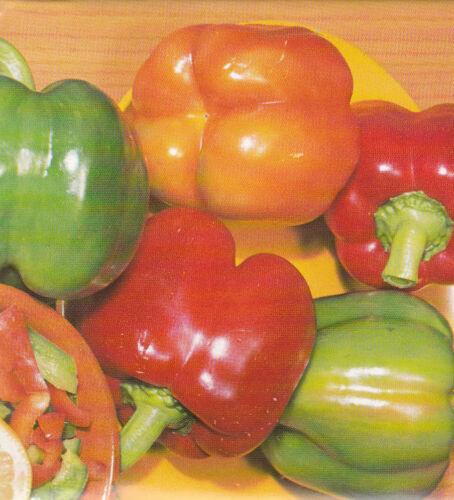 50 Samen Paprika Gemüsepaprika Frühzauber grüngelb rot abreifend ca Seeds