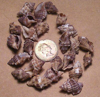Paquete 20g de lavados mezclados conchas tumdee Casa De Muñecas Jardín Arte Accesorio D