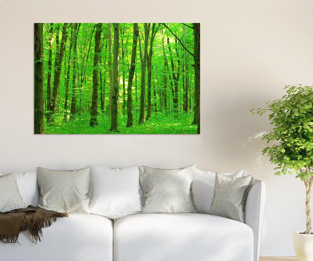 3D Natur Üppige greene Haine 764 Fototapeten Wandbild BildTapete AJSTORE DE Lemon