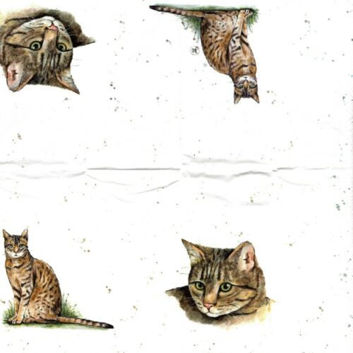PAPER NAPKINS//TISSUE CAT EUROPEAN SERVIETTES EN PAPIER//MOUCHOIRS CHAT EUROPEEN