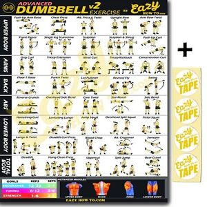 picture regarding Dumbbell Workout Chart Printable identified as Data relating to Superior Dumbbell Health and fitness Training Banner Poster Massive 28 x 20\