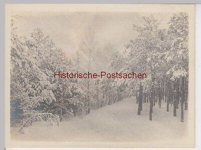 (f14200) Orig. Foto Berlin, Winter Im Grunewald 1910
