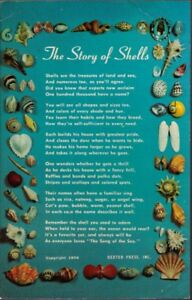 100u-Postcard-The-Story-of-Shells
