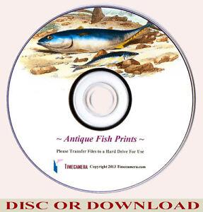 cfea31e84a2a Details about MAKE   SELL ANTIQUE FISH PRINTS – Restored Hi-Res Image Set -  DOWNLOAD   DISC