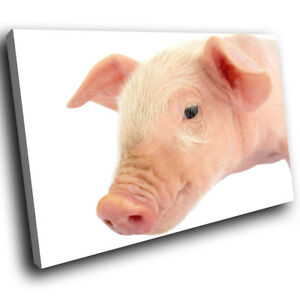 Pink-White-Baby-Pig-Cool-Funky-Animal-Canvas-Wall-Art-Large-Picture-Prints