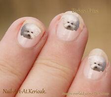 Bichon Frise, pequeño perro blanco, 24 Diseño Exclusivo Perro Nail Art pegatinas