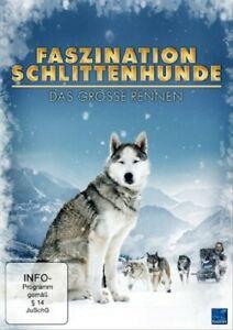 Faszination-Schlittenhunde-Das-Grosse-Rennen