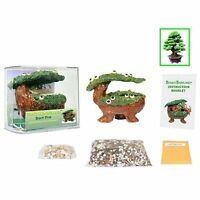 Eve's Bonsai Babyland Black Pine Seed Kit, Complete Kit To Grow Black Pine Bonsa on sale