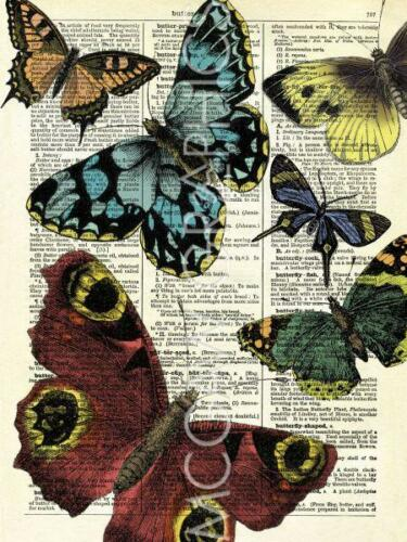 "Artwork Reproduc 14/"" x 11/"" McCONAGHIE MARION 2678 SELECTION OF BUTTERFLIES"
