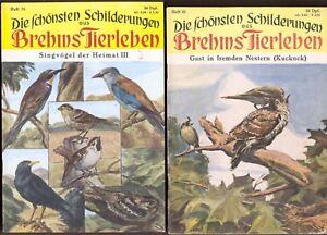 2-Hefte-Brehms-Tierleben-von-1953-1957-Kuckuck-Kolkrabe-Blaurake-Bienenfresser