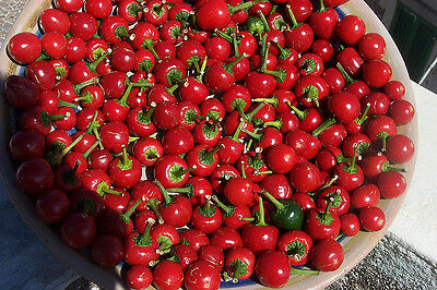 VEGETABLE SWEET PEPPER RED CHERRY 100 FINEST SEEDS