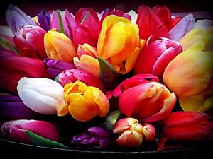 PHOTOGRAPH-BOUQUET-TULIPS-FLOWERS-COLOURFUL-PRINT-POSTER-MP3357A