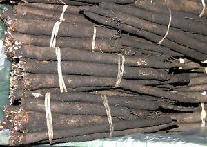50-Samen-Schwarzwurzel-Scorzonera-tolles-schmackhaftes-Wintergemuese